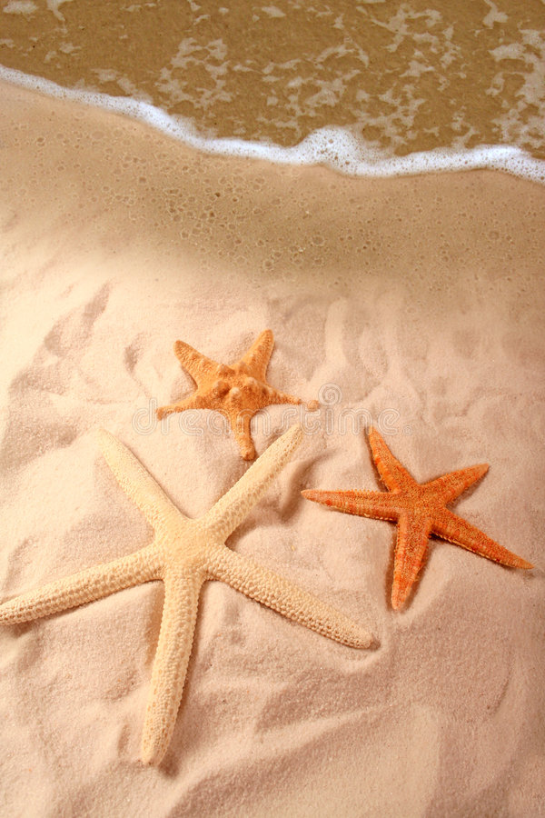 Starfish on Seashore stock images
