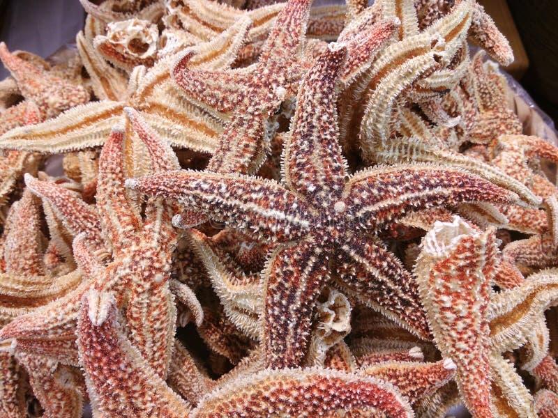 Starfish secados imagem de stock royalty free
