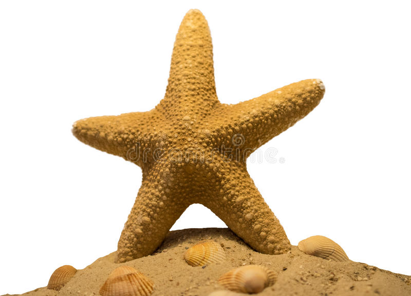 Starfish / Seestern stock images