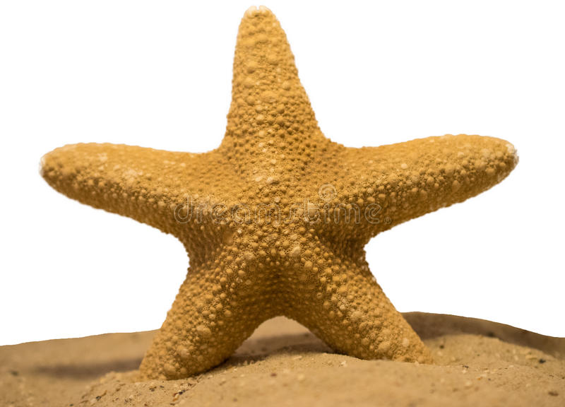 Starfish / Seestern royalty free stock images