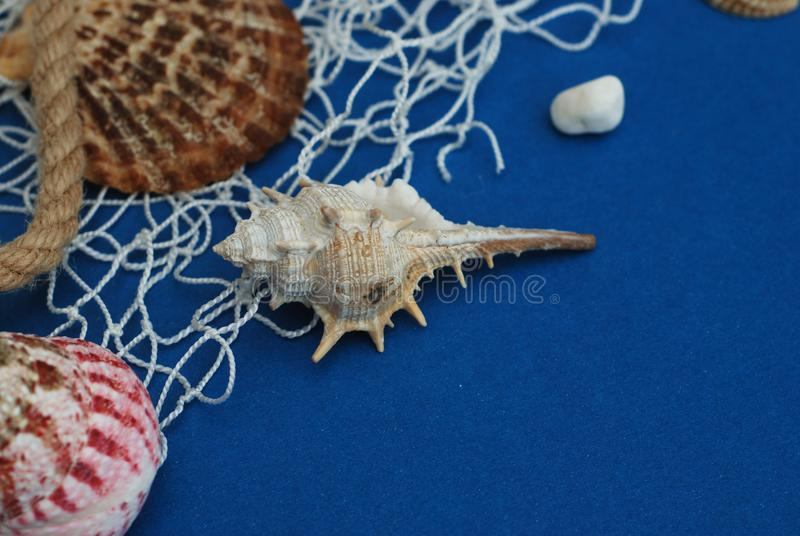Starfish, Shell, Stones, Rope and Net Against a Blue Background with Copy Space. Summer Holliday. Nautical, Marrine concept. royalty free stock image