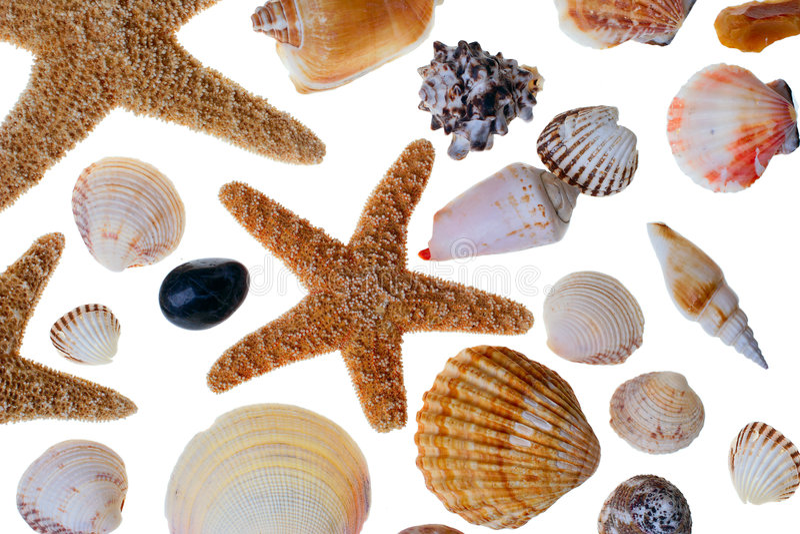 Starfish and shells stock photography