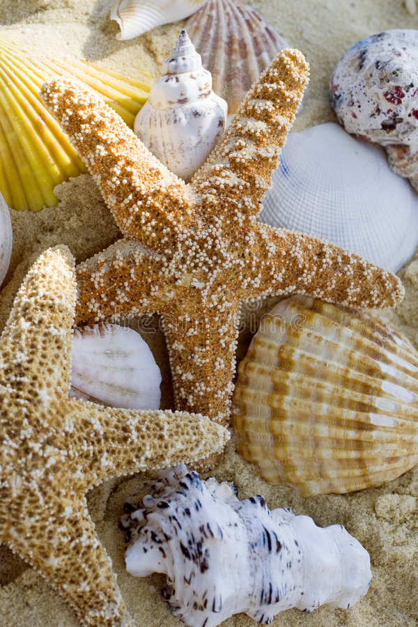 Starfish and shells on the beach royalty free stock photography