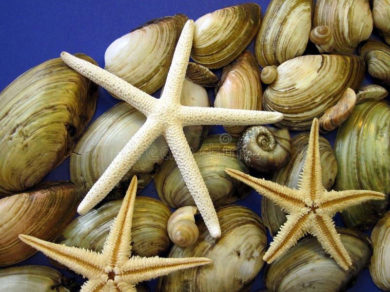 Starfish and shells royalty free stock photos