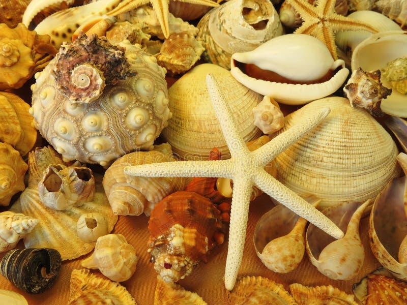 Starfish and shells pattern stock photography