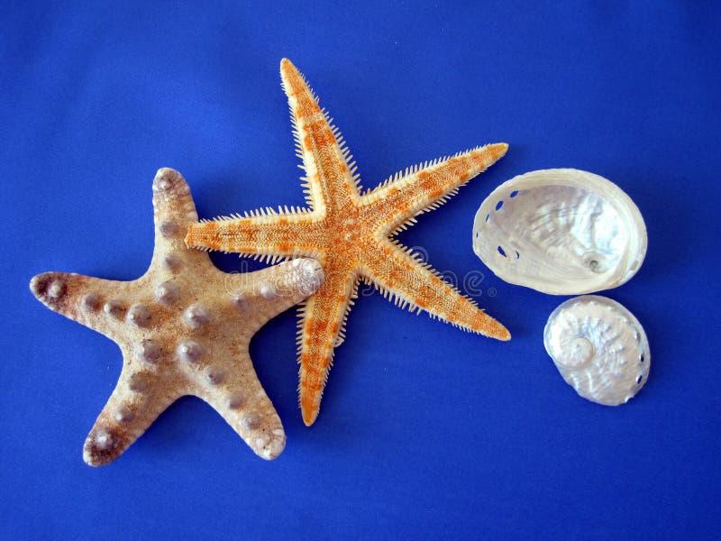 Starfish and shells royalty free stock photo
