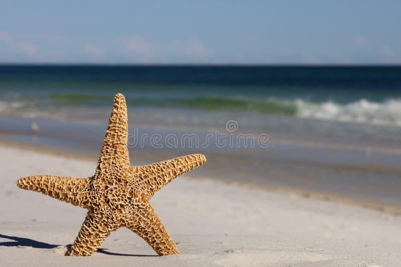 Starfish standing on the beach stock image