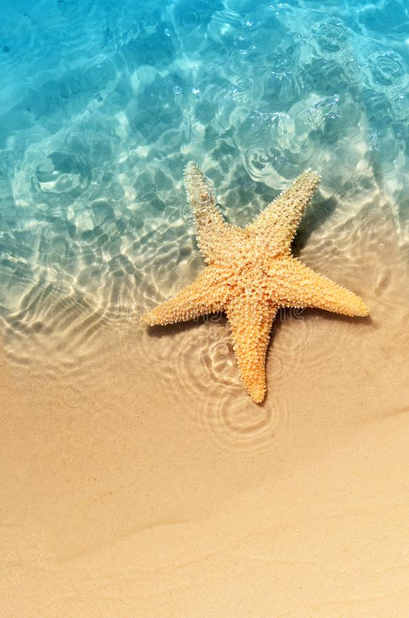 Starfish on the summer beach in sea water. royalty free stock image