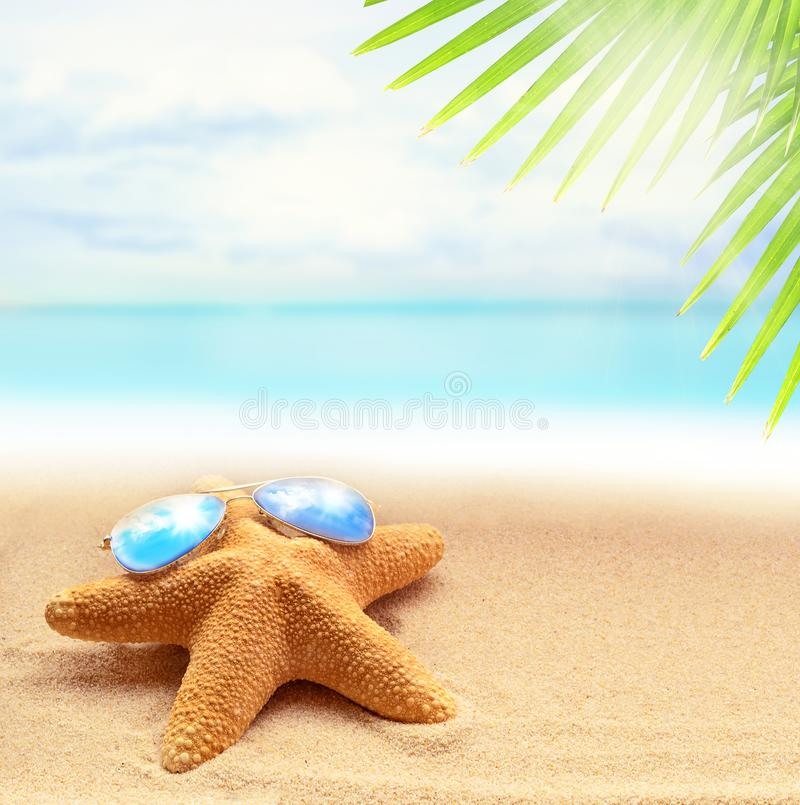 Starfish in sunglasses on the sandy beach and palm leaf stock photos