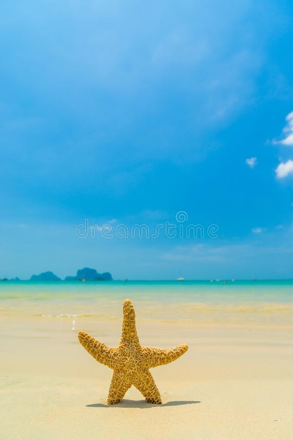 Starfish on the beach on a sunny day royalty free stock photo