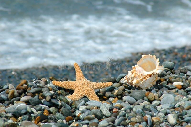 Starfish- und Cockleshelllüge auf einem Kiesel lizenzfreie stockfotos