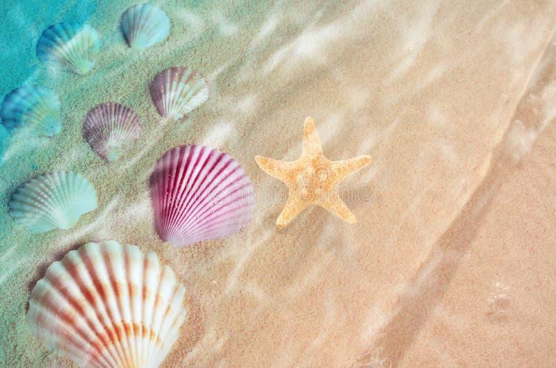 Starfish und Muschel auf dem Sommer setzen im Meerwasser auf den Strand lizenzfreie stockfotos