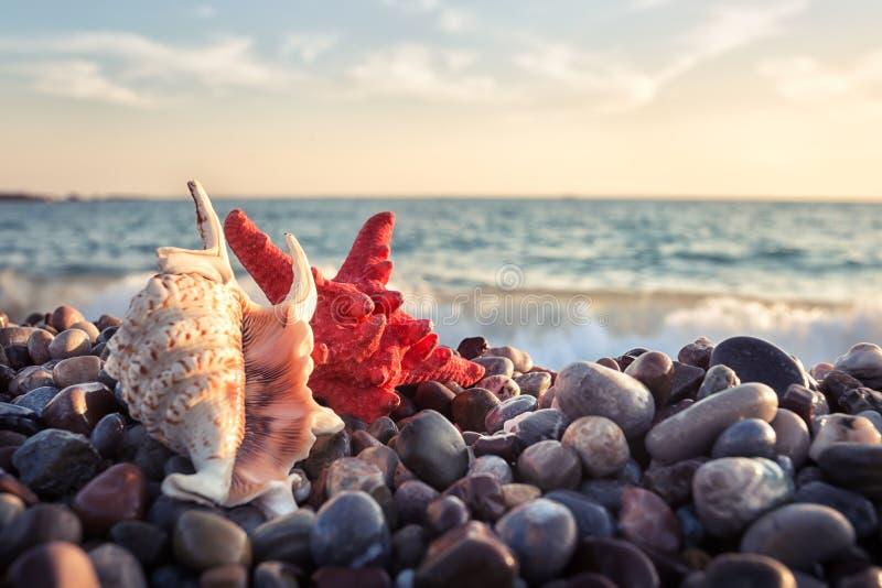 Starfish und Muschel auf Kieseln des Seeufers stockfotos