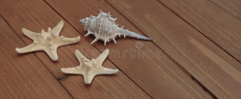 Starfish und Muscheln, Seeseedekoration über braunem hölzernem Hintergrund mit Kopienraum Fahne mit Kopie lizenzfreie stockfotos