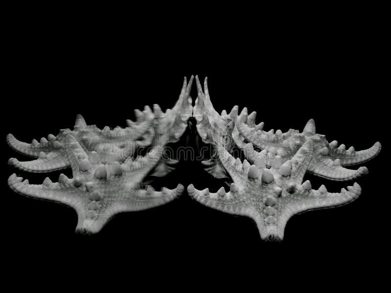Starfish und Oberteil Künstlerischer Blick in Schwarzweiss stockbilder