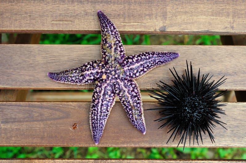 Starfish und Seeigel, Echinus lizenzfreie stockfotografie