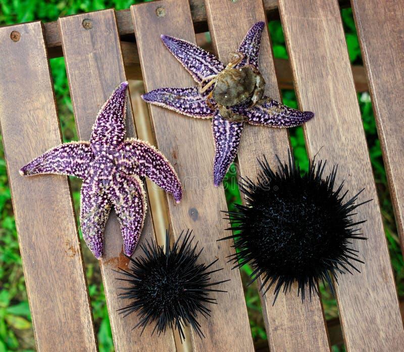 Download Starfish Und Seeigel, Echinus Stockfoto - Bild von bunt, auszug: 26354204