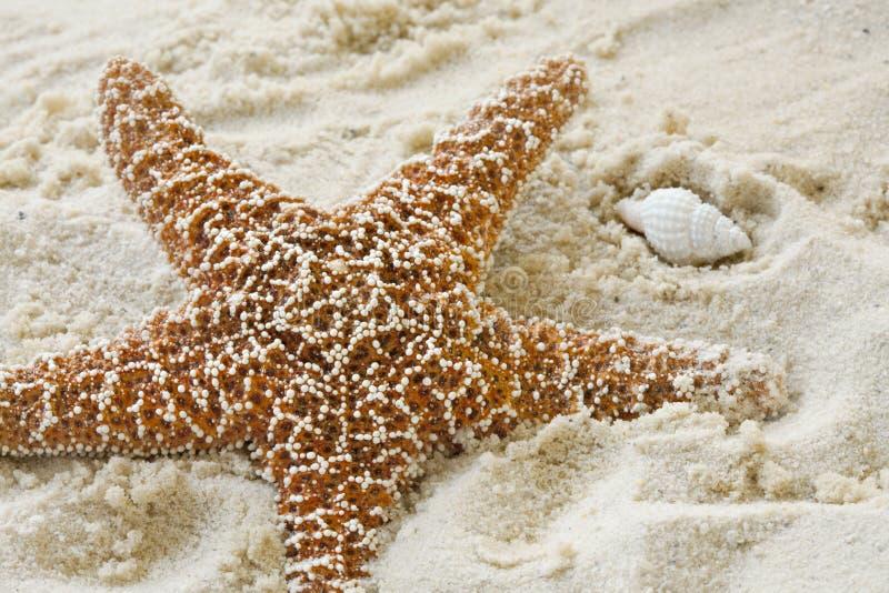 Starfish und Shell auf sandigem Strand lizenzfreies stockfoto