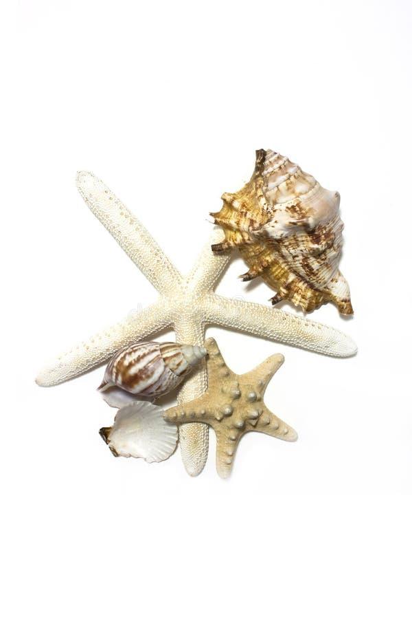 Starfish und Shells lizenzfreie stockfotos