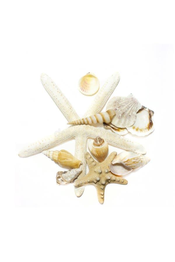 Starfish und Shells lizenzfreie stockfotografie