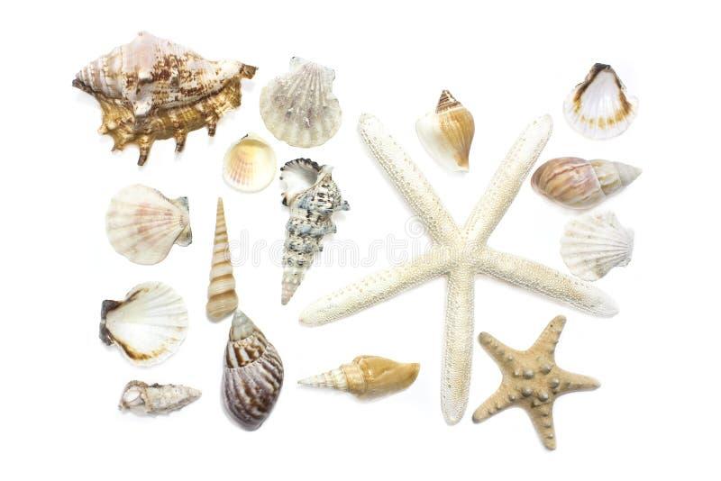 Starfish und Shells lizenzfreie stockbilder