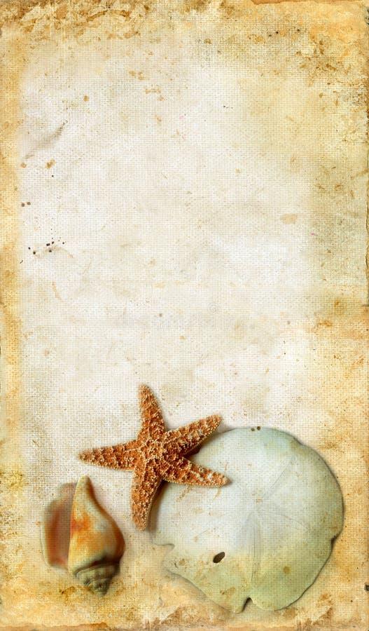 Starfish und Shells auf einem Grunge Hintergrund lizenzfreies stockfoto