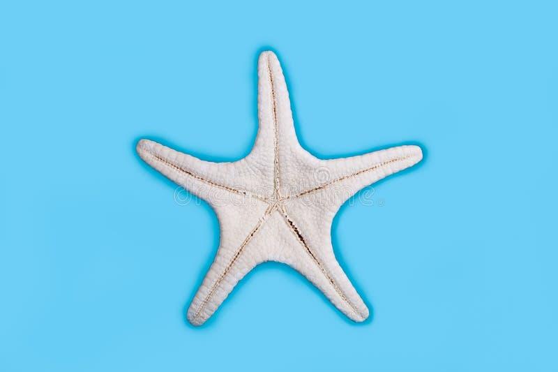 Starfish underside stock photos