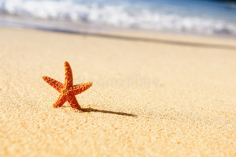 Download Starfish in vacations stock photo. Image of idyllic, exotic - 25626852