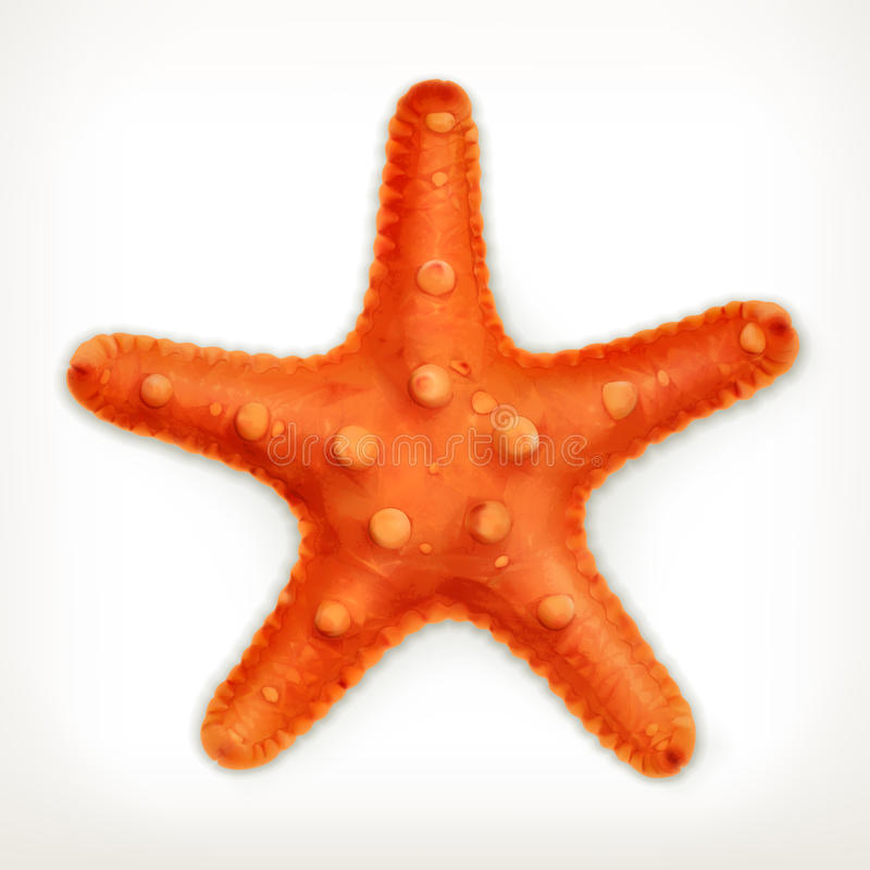 Starfish, vector icon. Isolated on white background royalty free illustration