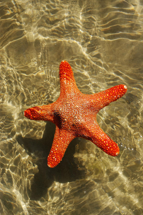 Starfish in a water. royalty free stock photos