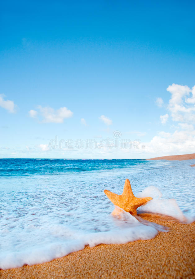 Starfish wave beach background royalty free stock images