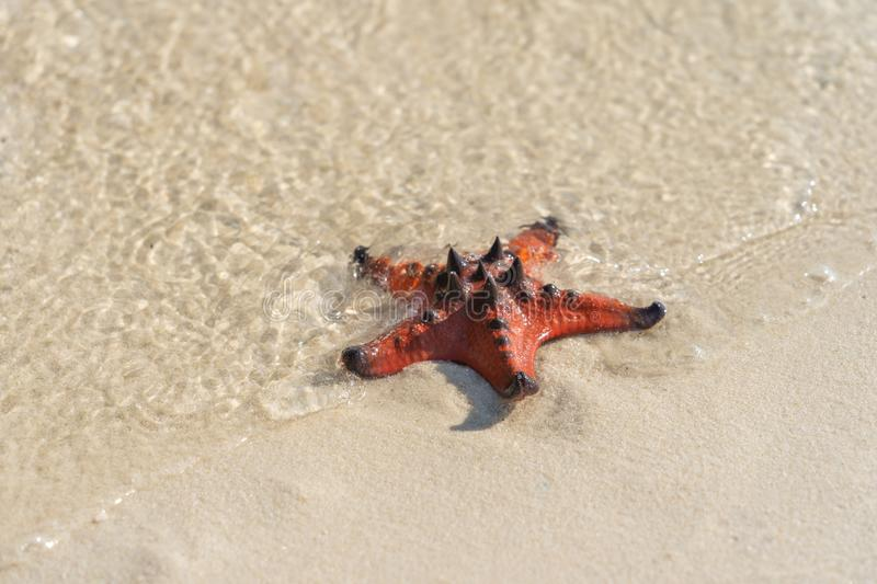 Starfish on the wet white sand in beautiful beach royalty free stock image