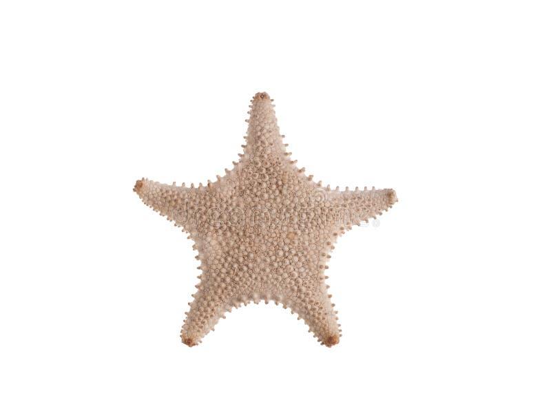 Starfish on white background. Sealife stock photos