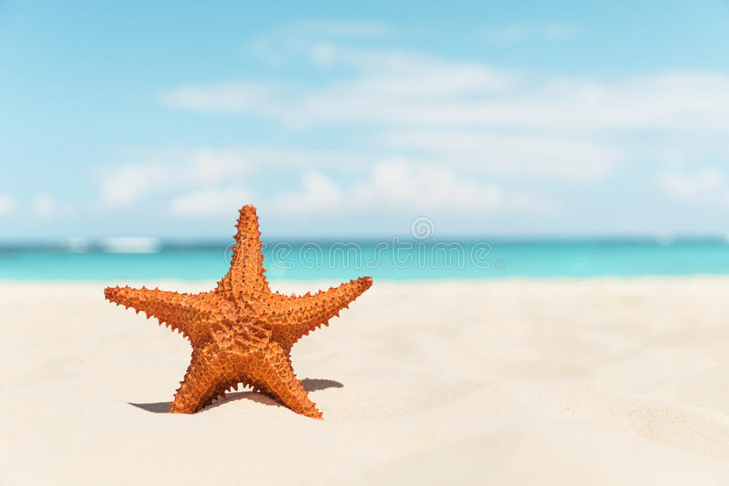 Starfish on the white beach royalty free stock photography