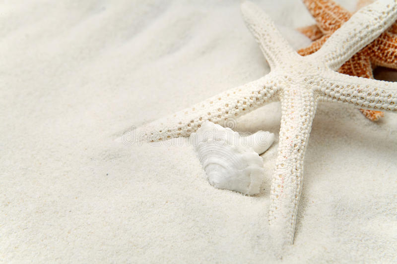 Starfish On White Sand. With A Seashell