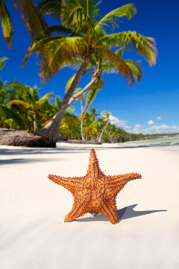 Starfish on white sand royalty free stock photos