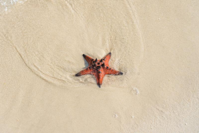 Starfish on the white sand at the beautiful beach stock photos