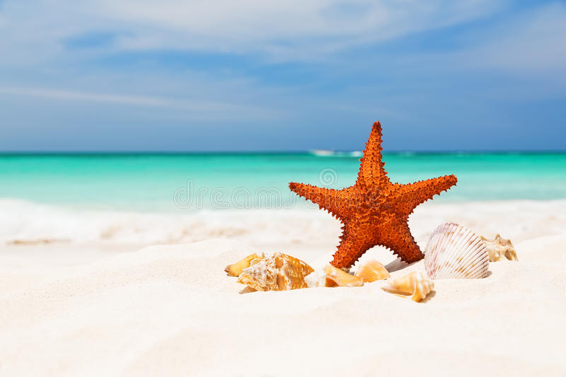 Starfish on the white sandy beach stock photography