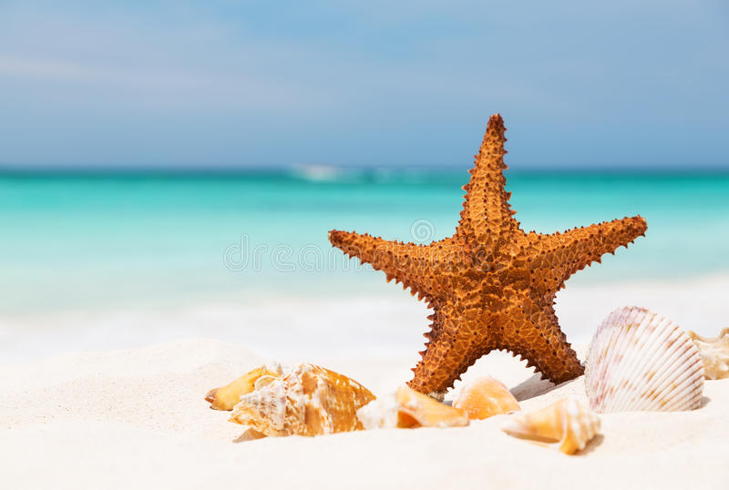 Starfish on the white sandy beach royalty free stock images