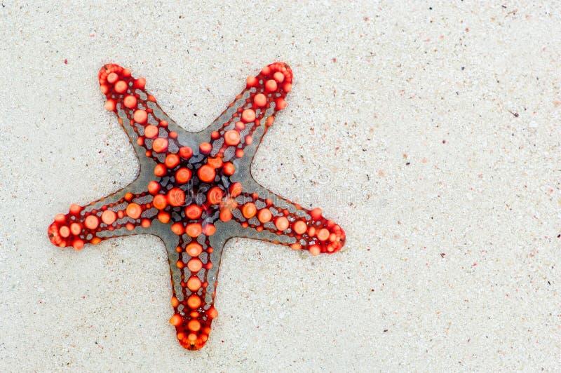 Starfish, wirbelloses Tier, Stachelhäuter, Marine Invertebrates stockfoto