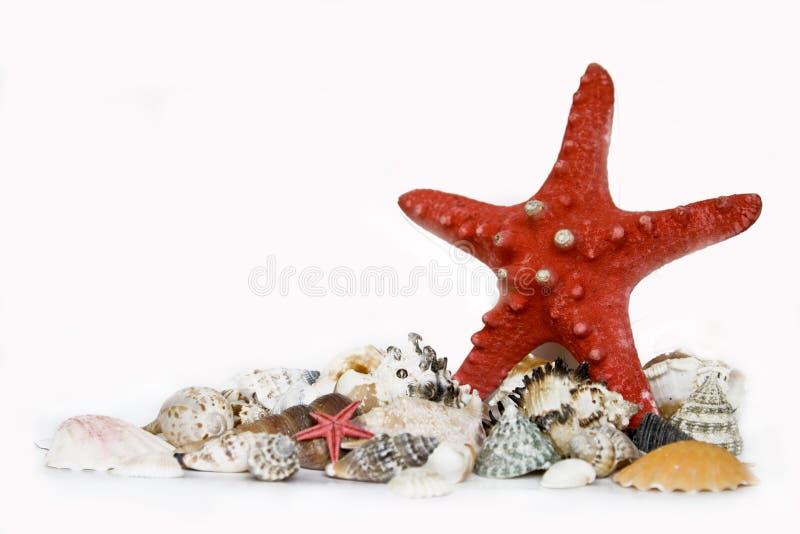 Starfishand seashells stock photo