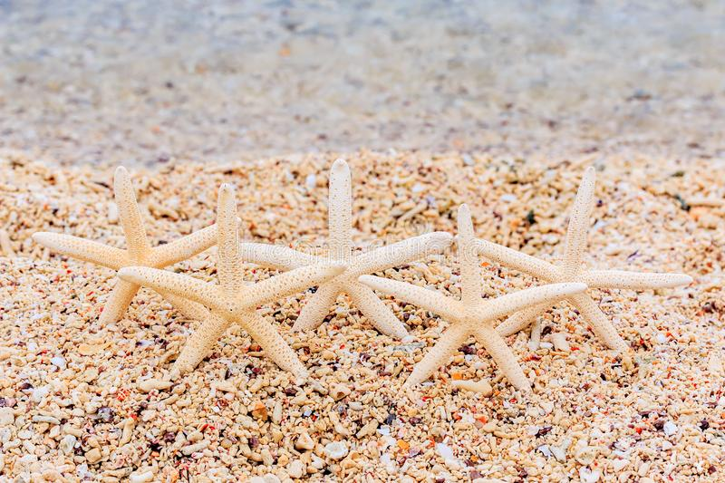 starfishes images stock
