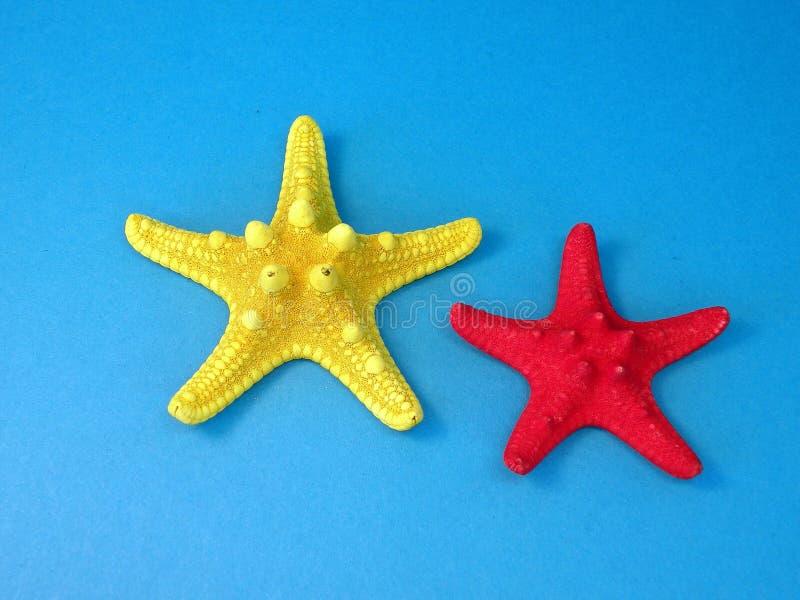 Starfishes stock image