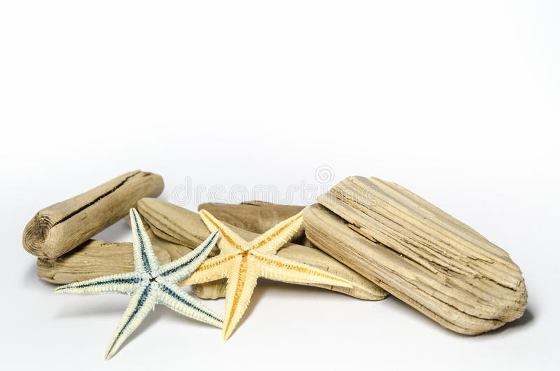 starfishes photos stock