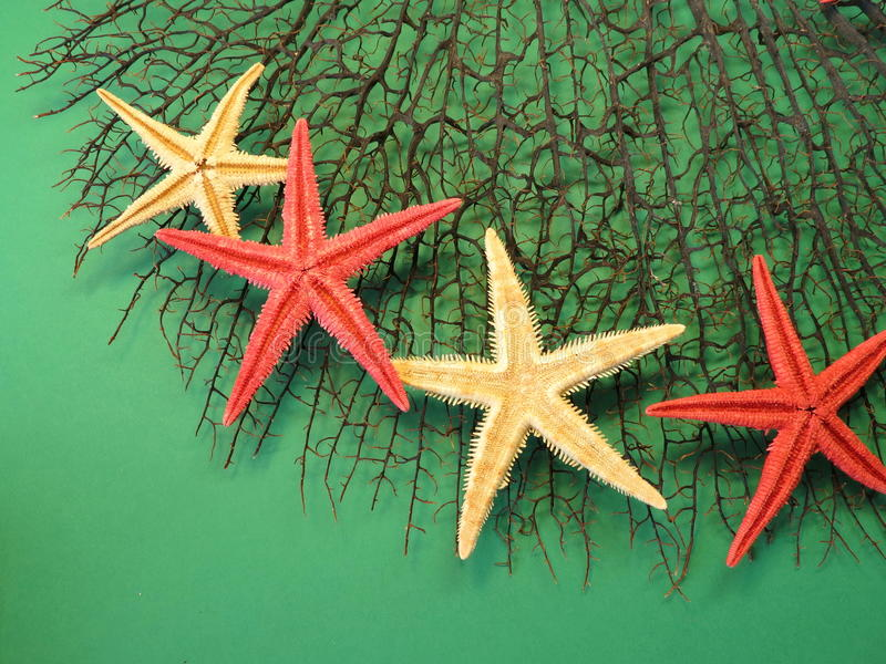 Starfishes on coral royalty free stock image
