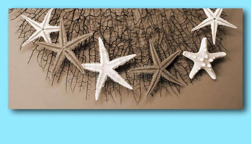 Starfishes on coral stock image