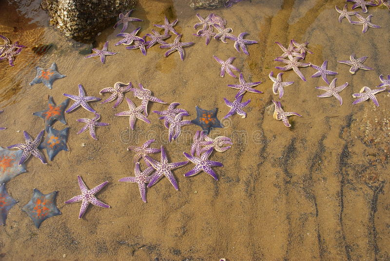 StarFishes lay on the Beach royalty free stock image