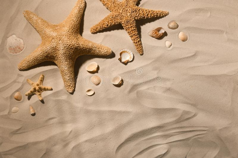 Starfishes and seashells on beach sand, top view stock photo