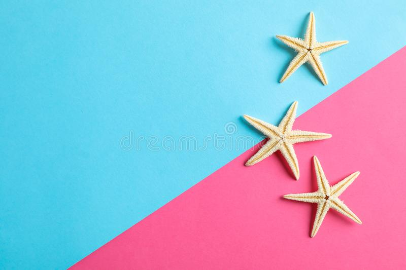 Starfishes on two tone background, space for text. Summer backdrop royalty free stock photography