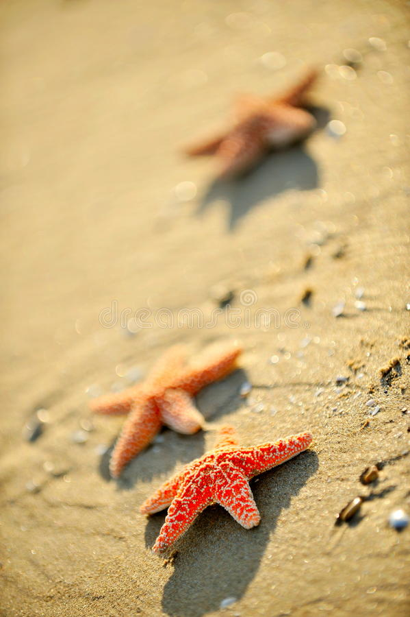 Download Starfishes on wet sand stock photo. Image of summer, over - 10294008